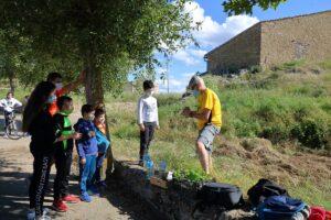 plantación de calabazas para la fiesta de halloween en la fuente romana de los 3 caños de malanquilla