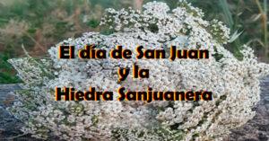 la hidedra sanjuanera y la festividad de san juan